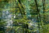 Green Reflections, Yosemite B85S1565