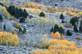 Fall, Eastern Sierra CRW_6350